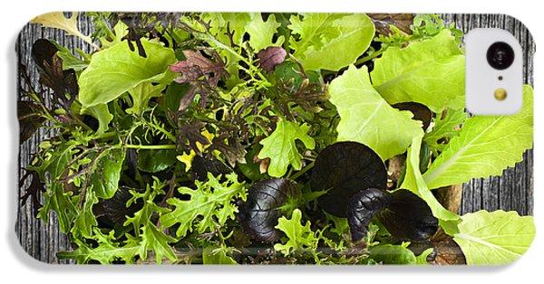 Lettuce Seedlings IPhone 5c Case by Elena Elisseeva