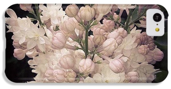 Lilacs Are Blooming IPhone 5c Case by Christy Beckwith