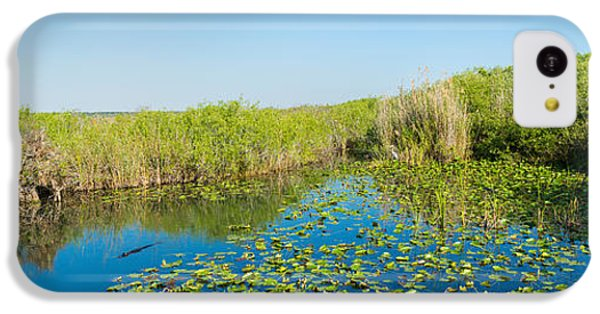 Anhinga iPhone 5c Case - Lily Pads In The Lake, Anhinga Trail by Panoramic Images