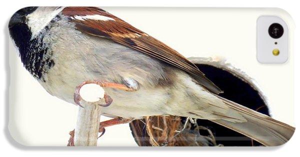 Little Sparrow IPhone 5c Case by Karen Wiles