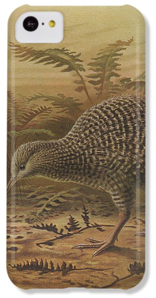 Little Spotted Kiwi IPhone 5c Case by Rob Dreyer