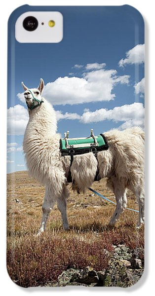 Llama iPhone 5c Case - Llama Portrait by Ryan Heffernan
