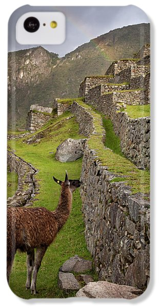 Llama Stands On Agricultural Terraces IPhone 5c Case by Jaynes Gallery