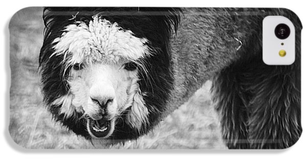 IPhone 5c Case featuring the photograph Llama by Yulia Kazansky