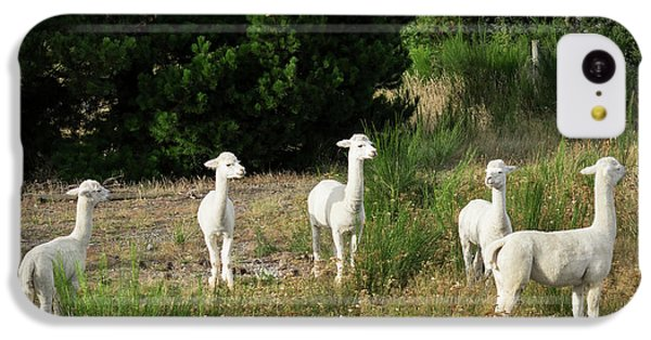 Llama iPhone 5c Case - Llamas Standing In A Forest by Panoramic Images
