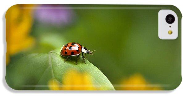 Lonely Ladybug IPhone 5c Case by Christina Rollo