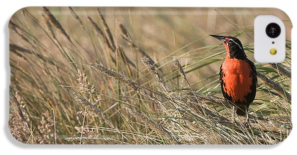 Long-tailed Meadowlark IPhone 5c Case by John Shaw