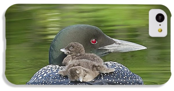 Loon Chicks -  Nap Time IPhone 5c Case
