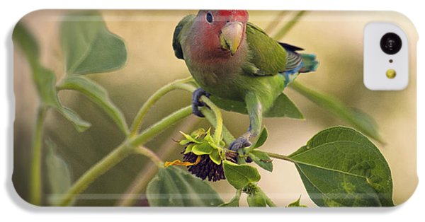 Lovebird On  Sunflower Branch  IPhone 5c Case