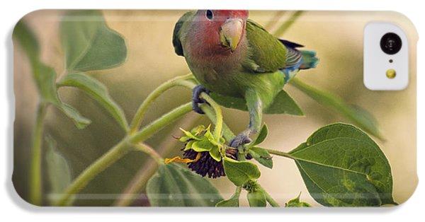 Lovebird On  Sunflower Branch  IPhone 5c Case by Saija  Lehtonen