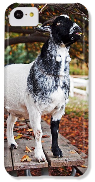 Lunch With Goat IPhone 5c Case