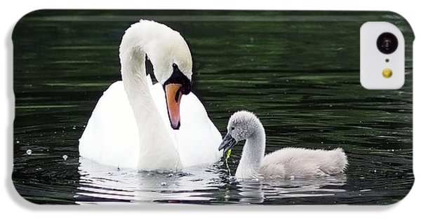 Lunchtime For Swan And Cygnet IPhone 5c Case