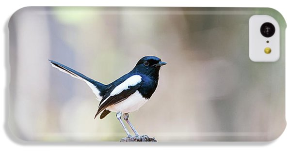 Magpies iPhone 5c Case - Madagascan Magpie-robin Male by Dr P. Marazzi