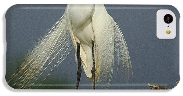 Majestic Great Egret IPhone 5c Case by Bob Christopher