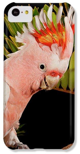 Cockatoo iPhone 5c Case - Major Mitchell's Cockatoo, Lophochroa by David Northcott