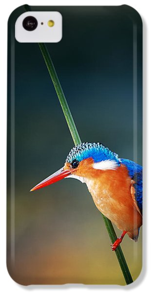 Malachite Kingfisher IPhone 5c Case by Johan Swanepoel