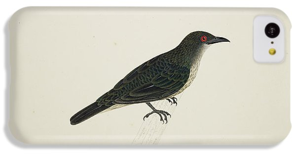 Starlings iPhone 5c Case - Malay Glossy Starling by British Library