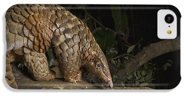 Malayan Pangolin Eating Ants Vietnam IPhone 5c Case