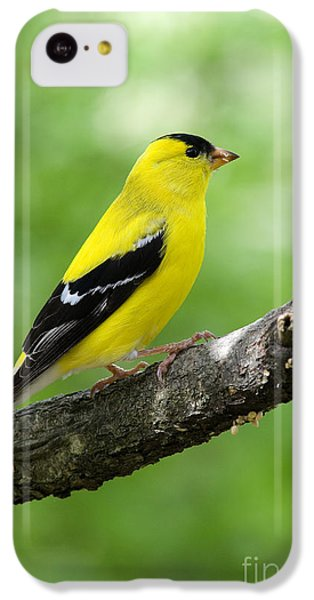 Finch iPhone 5c Case - Male American Goldfinch by Thomas R Fletcher