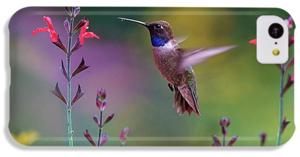 Male Black-chinned Hummingbird IPhone 5c Case
