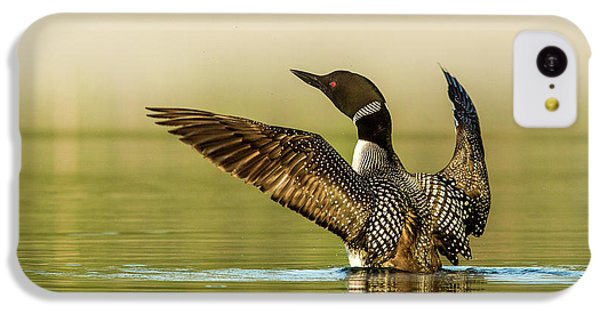 Loon iPhone 5c Case - Male Common Loon Drying His Wings by Chuck Haney