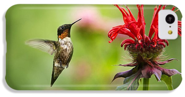 Male Ruby-throated Hummingbird Hovering Near Flowers IPhone 5c Case by Christina Rollo