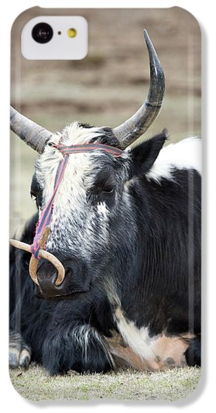 Male Yak In Potatso National Park IPhone 5c Case