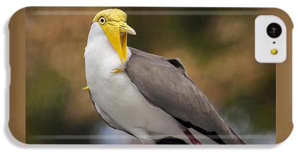 Masked Lapwing IPhone 5c Case by Carolyn Marshall