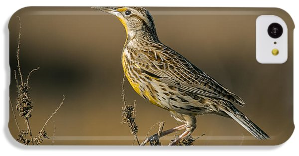 Meadowlark On Weed IPhone 5c Case