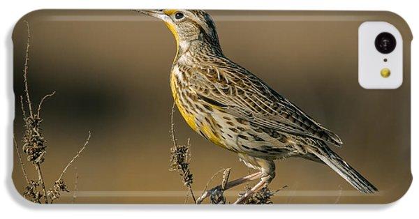 Meadowlark On Weed IPhone 5c Case by Robert Frederick