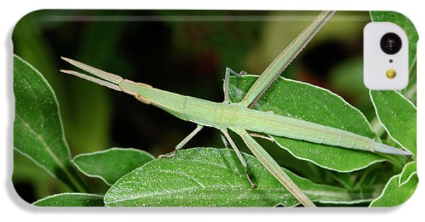 Mediterranean Slant-faced Grasshopper IPhone 5c Case by Nigel Downer