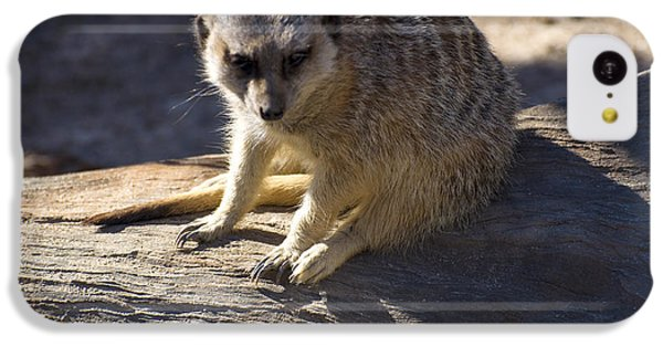 Meerkat Resting On A Rock IPhone 5c Case