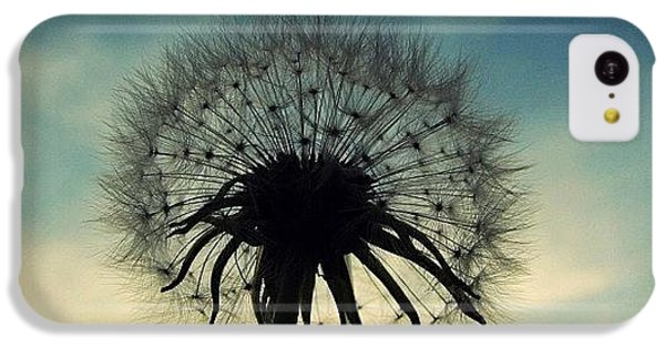 Sky iPhone 5c Case - #mgmarts #dandelion #weed #sunset #sun by Marianna Mills