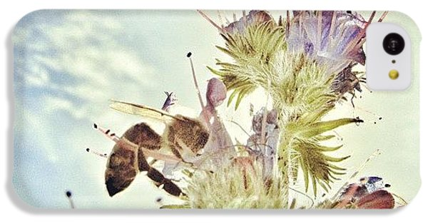 Sky iPhone 5c Case - #mgmarts #flower #spring #summer #bee by Marianna Mills