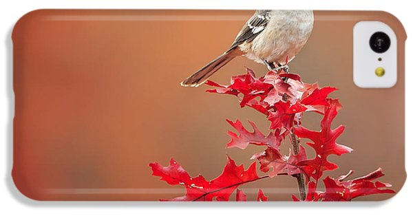 Mockingbird iPhone 5c Case - Mockingbird Autumn Square by Bill Wakeley