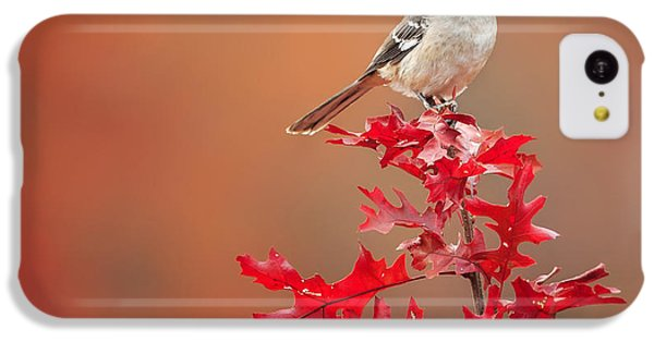 Mockingbird Autumn Square IPhone 5c Case by Bill Wakeley