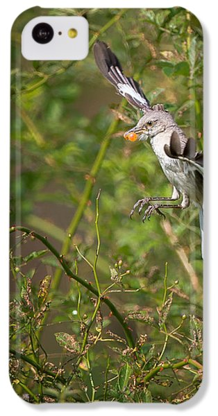Mockingbird IPhone 5c Case by Bill Wakeley