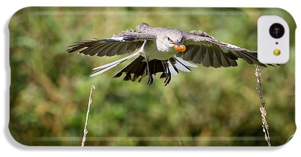 Mockingbird In Flight IPhone 5c Case by Bill Wakeley