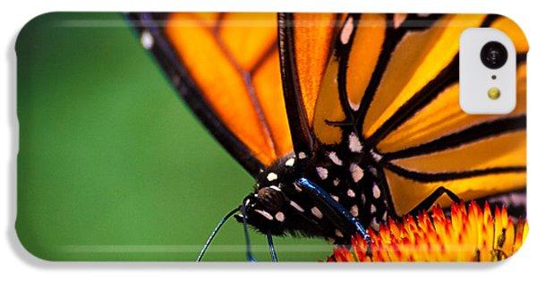 Orange iPhone 5c Case - Monarch Butterfly Headshot by Bob Orsillo