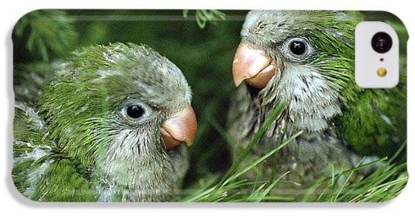 Monk Parakeet Chicks IPhone 5c Case by Paul J. Fusco