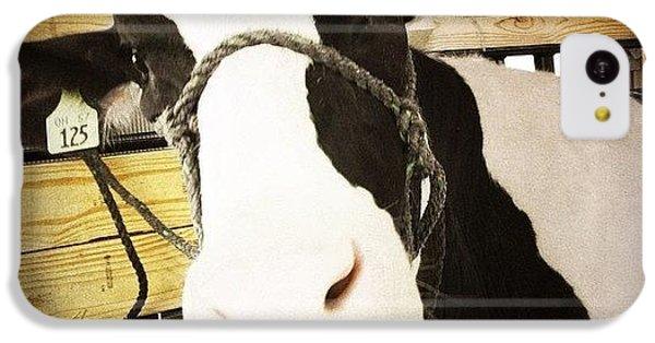 Ohio iPhone 5c Case - Moo Cow by Natasha Marco