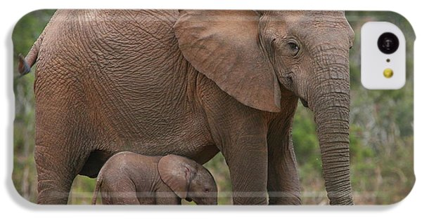 Mother And Calf IPhone 5c Case