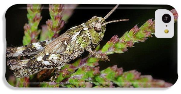 Mottled Grasshopper Juvenile IPhone 5c Case by Nigel Downer