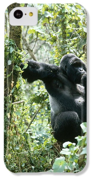 Mountain Gorilla IPhone 5c Case by Tierbild Okapia