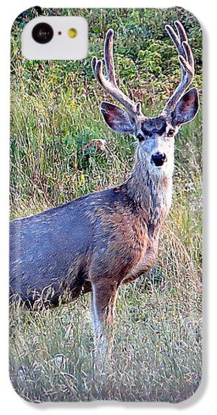 Mule Deer Buck IPhone 5c Case by Karen Shackles