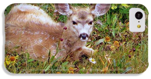 Mule Deer Fawn IPhone 5c Case by Karen Shackles