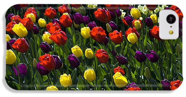 Multicolored Tulips At Tulip Festival. IPhone 5c Case