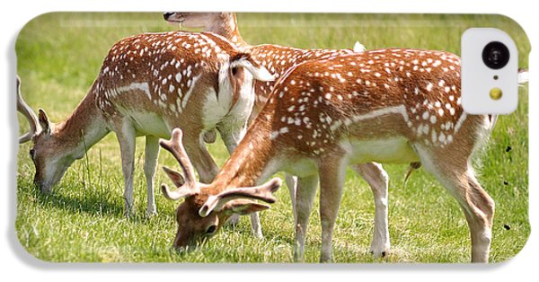 Multitasking Deer In Richmond Park IPhone 5c Case