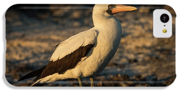 Nazca Booby (sula Granti IPhone 5c Case by Pete Oxford