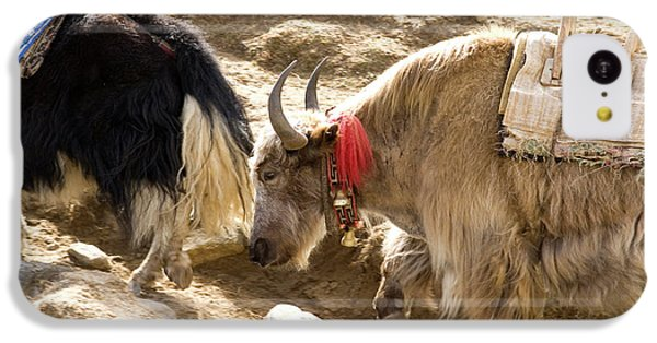 Nepal Yak Move Along The Everest Base IPhone 5c Case